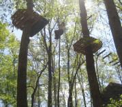 Treetop Quest