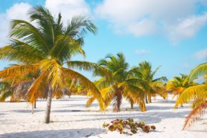 Palm_trees_on_the_sand_of_the_Sirena_beach_at_Cayo_Largo
