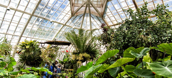 Le San Francisco Conservatory of Flowers