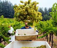 5 vignobles à visiter dans la Napa Valley